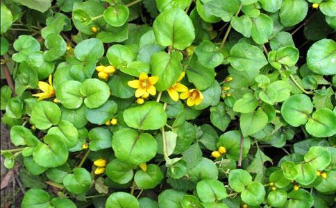 那几种植物好养活,轻轻松松养活植物