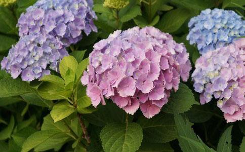 夏季植物有哪些 这几种植物让你清凉过夏天