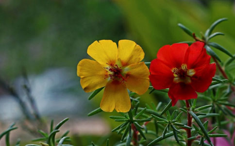向日葵会在暖气房中开花吗?房间内溫暖处才会盛开