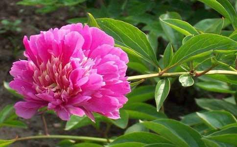 春季养花的三个方法是什么?需要的注意事项