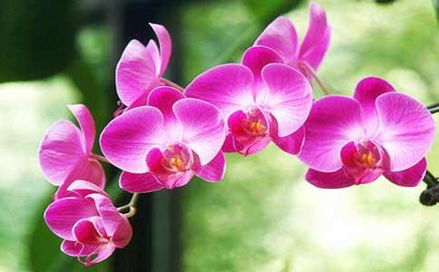 蝴蝶兰的种植方法和注意事项?