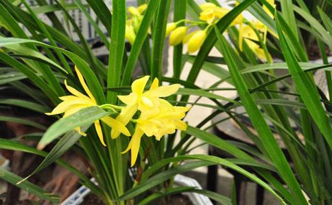 兰草的生长习性和种植注意事项?兰草喜阴,喜湿润,怕阳光直射,