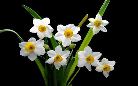 水仙花的种植方法?