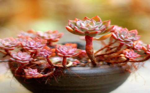 植物花卉盆栽