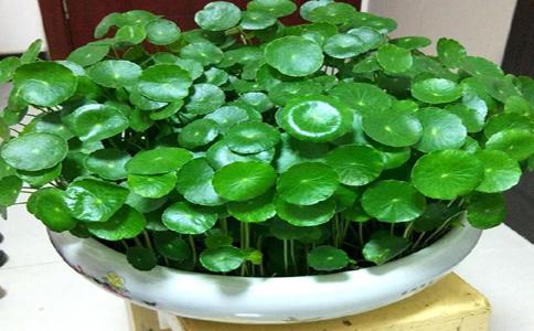 水培植物花卉都有哪些呢?