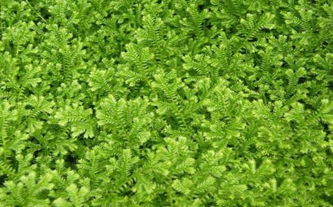 喜阴植物花卉都有哪些?这些喜阴植物大家都知道吗