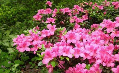 家庭花卉植物都有哪些?这些植物都适合家庭种植
