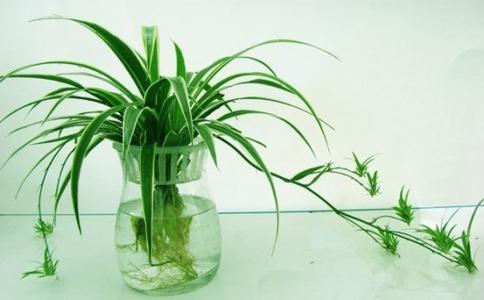 绿色植物花卉都有哪些?这些植物既好看又净化空气