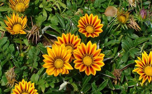 耐高温的花卉植物都有哪些