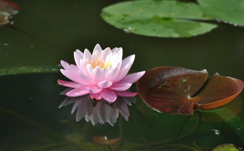 水生植物花卉都有哪些