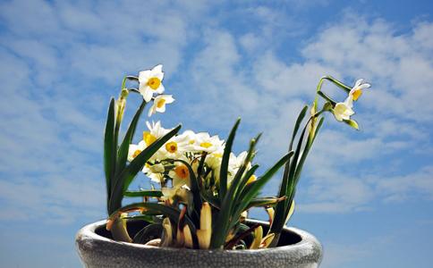 盆栽水仙花需要注意的事项?控制水量