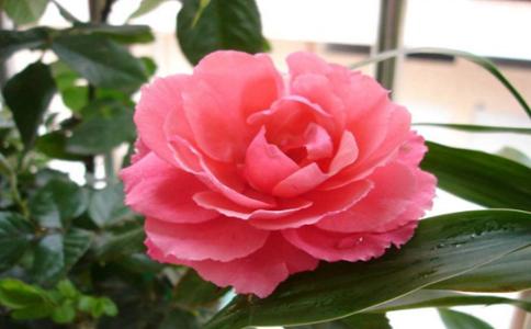维生素c可以用来养花吗
