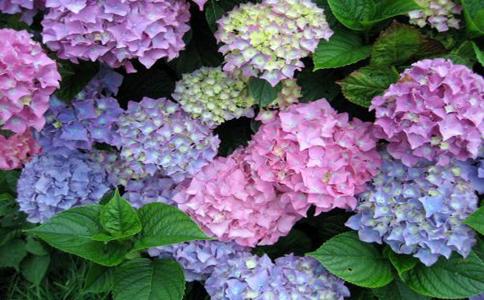 夏天室外不怕晒的植物?喜爱光照,烈日里放在阳台上