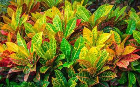 花卉观叶植物?这几种植物大家都知道了吗