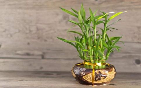 室内植物花卉都有哪些?这些植物很好养活